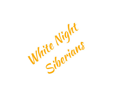 White Night Siberians